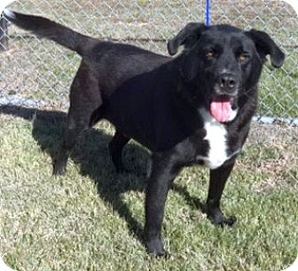 Labrador Retriever Mix Dog for adoption in Olive Branch, Mississippi - Lucky