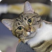 Adopt A Pet :: Heidi - Byron Center, MI