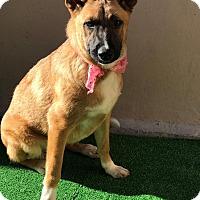 Adopt A Pet :: Madie - San Diego, CA