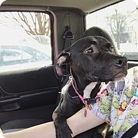 Adopt A Pet :: Diggy Azalea - Newport, KY