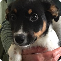 Adopt A Pet :: Laura - Minneapolis, MN