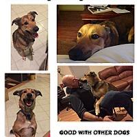 Adopt A Pet :: Ray - Hicksville, NY