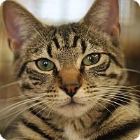 Adopt A Pet :: Benson - Richmond, VA