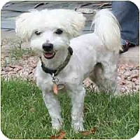 Adopt A Pet :: Guy - Phoenix, AZ