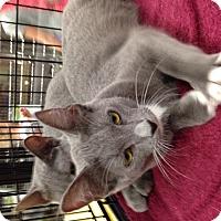 Adopt A Pet :: Tia - Simpsonville, SC