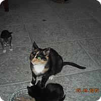 Adopt A Pet :: Tabitha - Riverside, RI