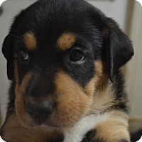 Adopt A Pet :: Ethel - Burleson, TX
