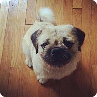 Adopt A Pet :: Alex - Acushnet, MA