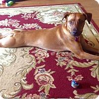 Adopt A Pet :: Autumn - Brea, CA