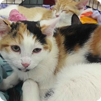 Adopt A Pet :: Vixen - Alamo, CA