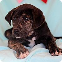 Adopt A Pet :: Vanessa - Waldorf, MD