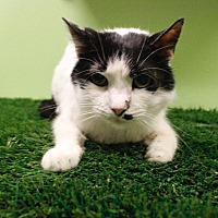 Adopt A Pet :: Ubbie Doobie - Chandler, AZ