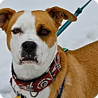 Adopt A Pet :: Tom-Bo - Hastings, NY