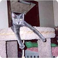 Adopt A Pet :: Jaffy - Clementon, NJ