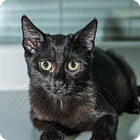 Adopt A Pet :: Ebony - New York, NY