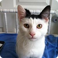 Adopt A Pet :: Batman - Trevose, PA