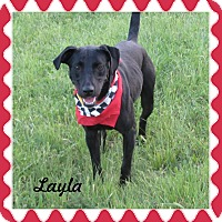 Labrador Retriever Mix Dog for adoption in Hillsboro, Texas - Layla