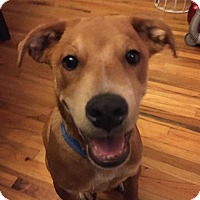 Adopt A Pet :: Rufus - Sinking Spring, PA