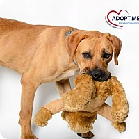 Adopt A Pet :: Roo - Alexandria, VA