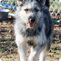 Adopt A Pet :: Patti - Patterson, CA