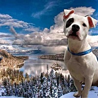 Adopt A Pet :: CHICO - Fairfield, CA