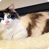 Adopt A Pet :: Penny - Tulsa, OK