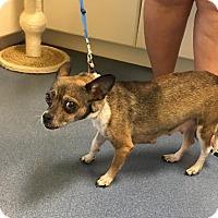 Adopt A Pet :: Vicky - Jupiter, FL