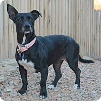 Adopt A Pet :: LOVIE - Hurricane, UT