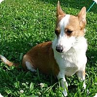 Adopt A Pet :: Hope - Afton, TN