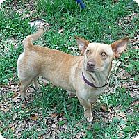 Adopt A Pet :: Odette - Ormond Beach, FL