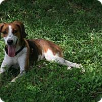 Adopt A Pet :: Lexi - Lufkin, TX