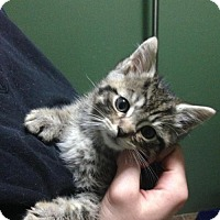 Adopt A Pet :: Howser - Hamilton, ON