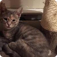 Adopt A Pet :: Linden - East Hanover, NJ