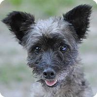 Adopt A Pet :: Phoenix - Ormond Beach, FL