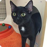 Adopt A Pet :: Leona - Stafford, VA