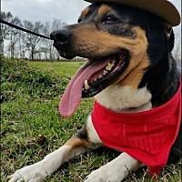 Hound (Unknown Type)/Shepherd (Unknown Type) Mix Dog for adoption in Huntington, New York - Daylee - N