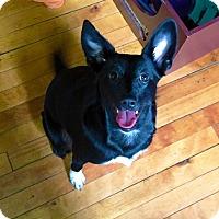 Adopt A Pet :: Gemmi - Sudbury, MA