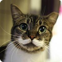 Adopt A Pet :: Rin - Winston-Salem, NC
