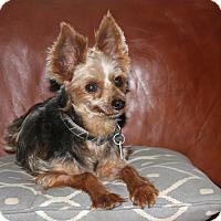 Adopt A Pet :: Roscoe - Newtown, PA