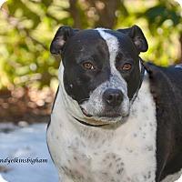 Adopt A Pet :: Lulu - Woodbury, NJ