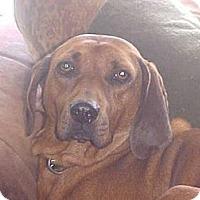 Adopt A Pet :: Casey - Fulton, NY