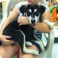 Adopt A Pet :: Zeus - Shirley, NY