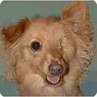 Adopt A Pet :: Gavin - New York, NY