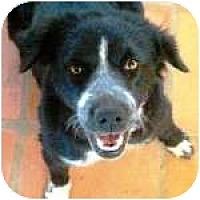 Adopt A Pet :: Pellet - Gilbert, AZ