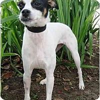 Adopt A Pet :: Renee in Houston - Houston, TX