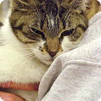 Adopt A Pet :: Melody - Pittstown, NJ