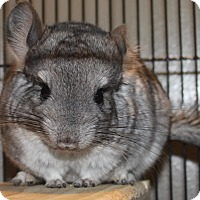 Adopt A Pet :: Mandy - Titusville, FL