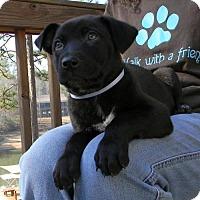 German Shepherd Dog Mix Puppy for adoption in Montgomery, Alabama - Pudge