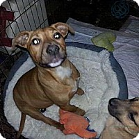 Adopt A Pet :: Saucy - East Rockaway, NY