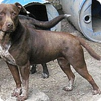 Adopt A Pet :: Haddie - Tahlequah, OK